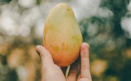 В Турции собрали первый урожай тропических фруктов